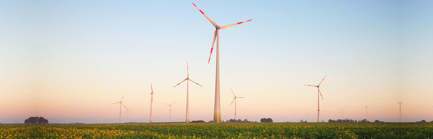 Windmolens in veld